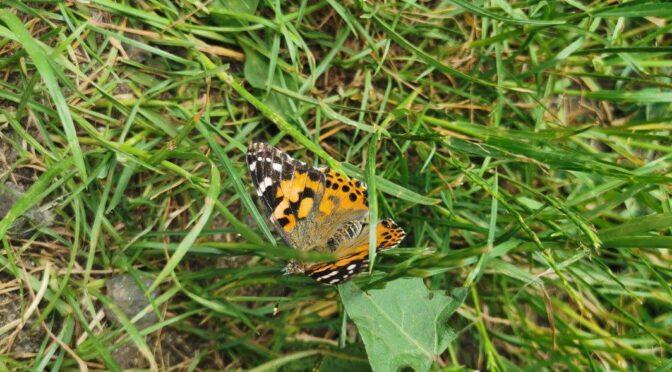 10.06.2021 – Schmetterlinge in der Vorschule